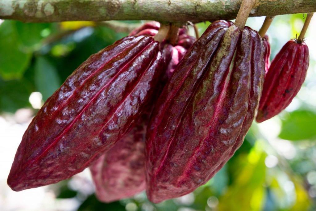 Oro Chocolate 011958-1024x683 Process: Bean-to-Bar