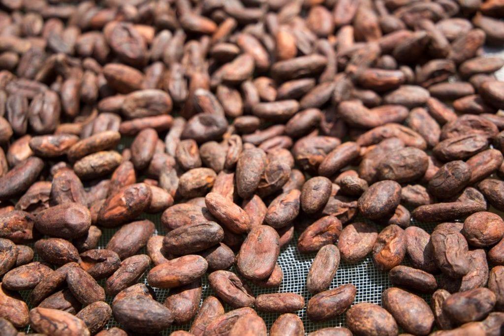 Oro Chocolate 012186-1024x683 Process: Bean-to-Bar