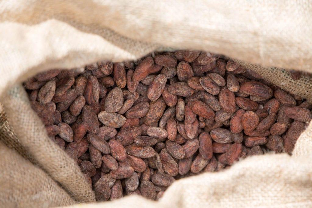 Oro Chocolate 012203-web-optimized-1024x683 Process: Bean-to-Bar