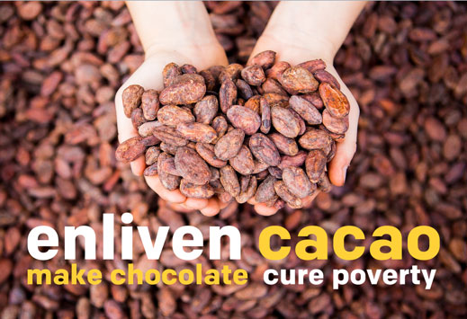 Oro Chocolate enliven-web-optimized Cacao Reforestation